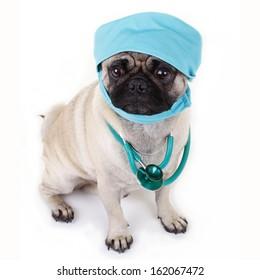 Pug dog with stethoscope