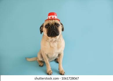 Pug Dog wearing a Canada Day hat