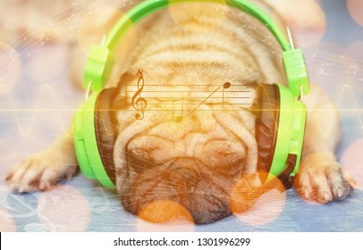 The pug dog wearing headphones