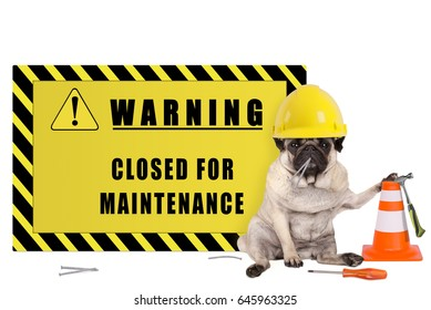 pug dog with yellow constructor safety helmet and warning sign with text closed for maintenance, isolated on white background