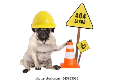 pug dog with yellow constructor safety helmet and cone, and 404 error and dead end sign on wooden pole, isolated on white background