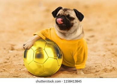 pug happy smiling