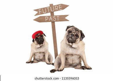 pug puppy dog and aged animal sitting next to signpost with text past and future, isolated on white background
