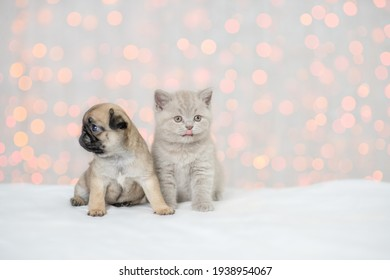 Pug puppy and Kitten sit together on festive background