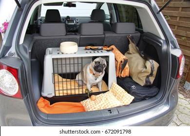 Umarmen in einem Käfig im Kofferraum eines Autos
