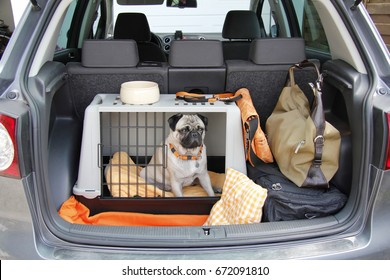 Pug sitting in a cage in the trunk of a car