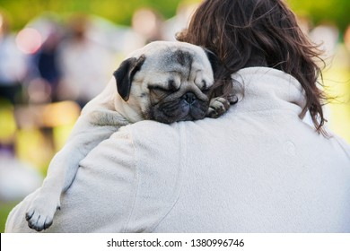 Pug sleeps on the host's shoulder at a dog show