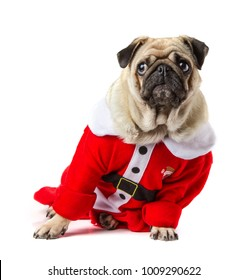 Pug wearing a santa claus costume on white background