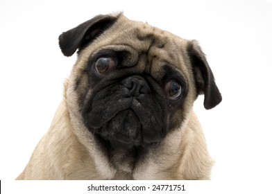 Pug with Worried Look