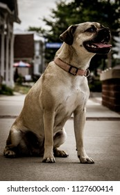 Puggle in the city