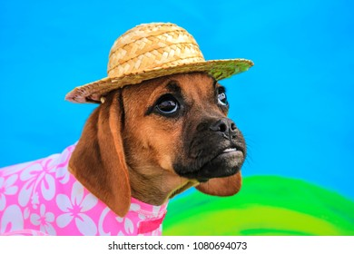 Puggle Puppy Wearing a Straw Hat and a Pink and White Hawaiian Flower Dress in front of a Summer Background
