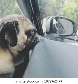 Puggy dog images stock photos vectors shutterstock puggy dog lying on the car mirror thecheapjerseys Image collections