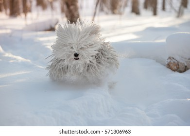 Puli running on snow in winter. Hungarian Sheepdog.