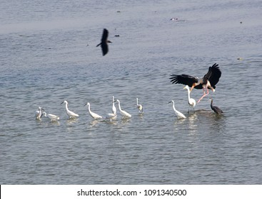 Pulicat Lake, the Famous Bird Sanctuary Tamil Nadu, India With Birds And Fishing Boats