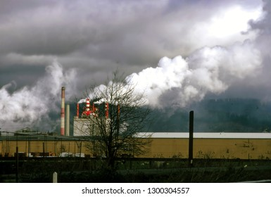 Pulp and Paper mill near  Eugene, Oregon