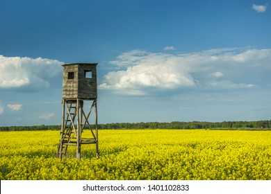 Pulpit for hunting in a rape field, horizon and clouds on a blue sky