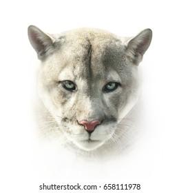 puma face on white background