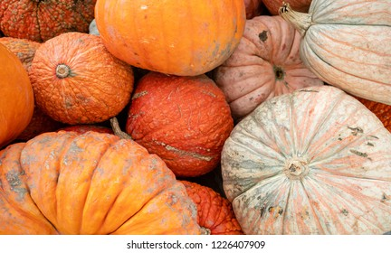 Pumkins and Gourds Piled up in a Traditional Fall Produce Display