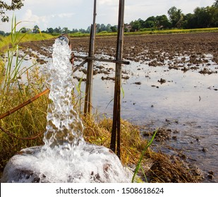 Pumping groundwater to harvest off-season rice using water