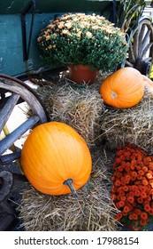 pumpkin,