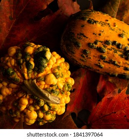 Pumpkin, autumn, Knucklehead on the leaves and background