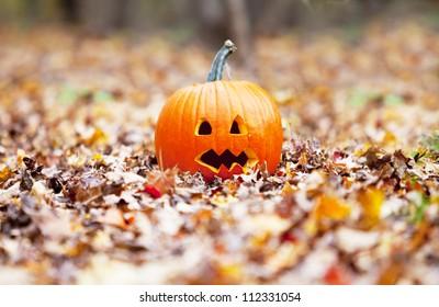 pumpkin in autumn leaves