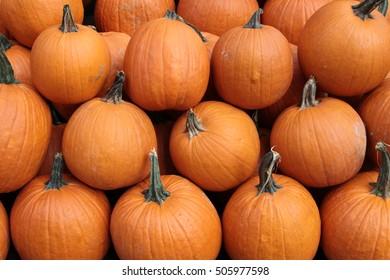 Pumpkin background.