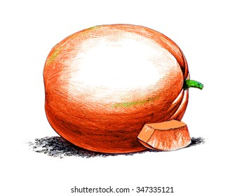 Pumpkin. Botany