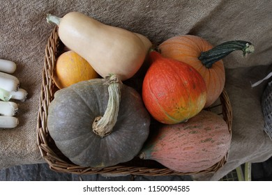 Pumpkin decoration for Halloween. Colorful ornamental pumpkins, gourds and squash. Variety of colorful ornamental gourds and pumpkins. Pumpkins for Halloween holiday. Pumkins wallpaper. Autumn backgro