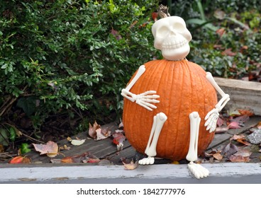 A Pumpkin dressed as a Skeleton.