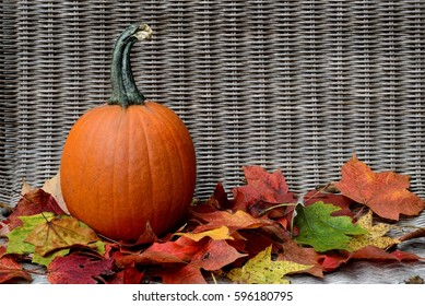 Pumpkin with fall leaves background