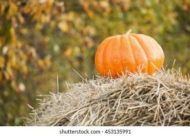 pumpkin in the field, haystacks, autumn