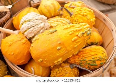Pumpkin gourds