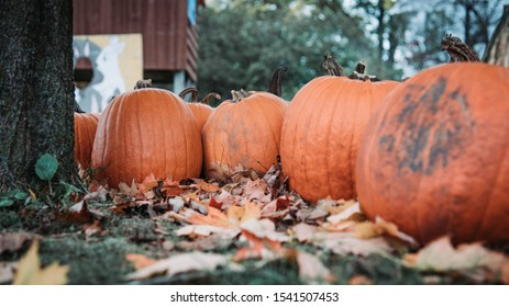 #pumpkin #halloween #fall #autumn #october #pumpkinspice #pumpkins #falldecor #jackolantern #spooky #cozy #pumpkinpatch #q #trickortreat #happyhalloween #witch #handmade #love #autumnvibes