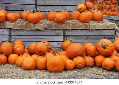 pumpkin harvest and arranged on straw and wood box