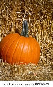 Pumpkin and Hay
