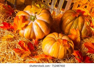 The pumpkin lies on the hay. Autumn squash. Pumpkin with autumn leaves.