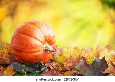 Pumpkin on autumn leaves with blurred background