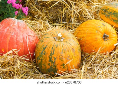Pumpkin on hay background