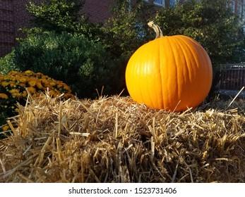 Pumpkin on hay bale next to orange flowers in in August. Autumn. Halloween.