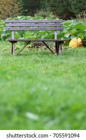 pumpkin on nature at village