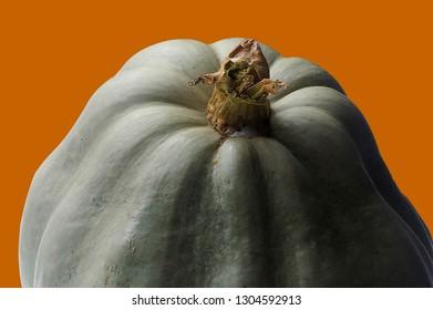 Pumpkin on an Orange Background