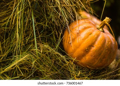 pumpkin on the side of the hay