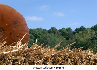 A pumpkin on a straw bale against a blue sky with green foliage in the background