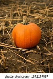 Pumpkin On Straw and Mud