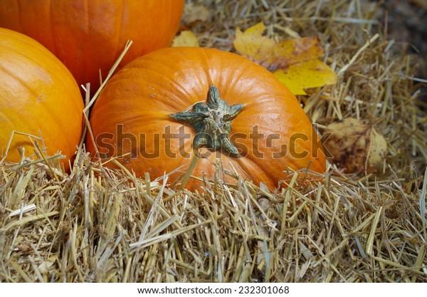 Pumpkin on wheat straw
