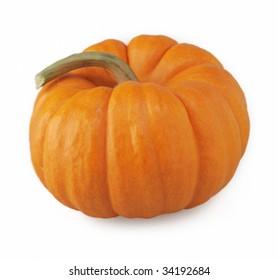 pumpkin one orange halloween thanksgiving harvest isolated