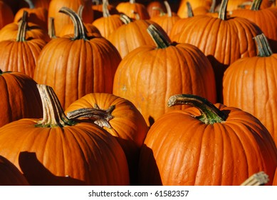 Pumpkin Patch in Autumn