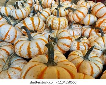 Pumpkin patch in fall.