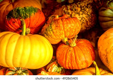 Pumpkin Patch Farm Series - Beautiful and colorful pumpkins in the barn 1